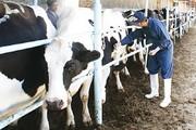 بیماری تب برفکی در کشور کنترل شده است