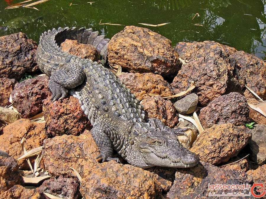 ترسناک ترین حیوان ایران، گاندو