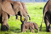 کاهش ۶۰ درصدی جمعیت حیات وحش جهان
