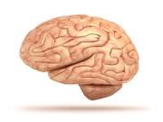 تلاش محققان هاروارد برای تدوین اطلس مغز
