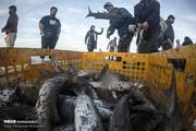 تصدير 25 مليون دولار من الأسماك الى العراق