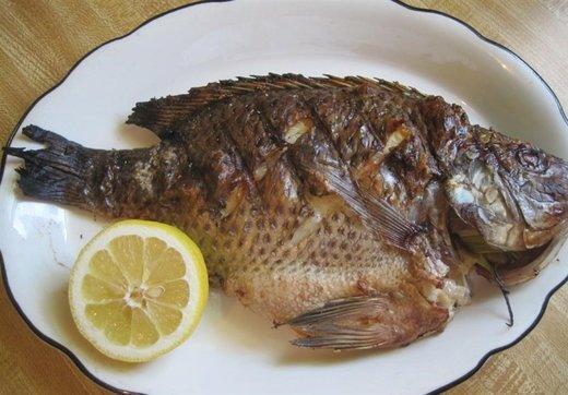 چرا مصرف ماهی «تیلاپیا»خطرناک است؟