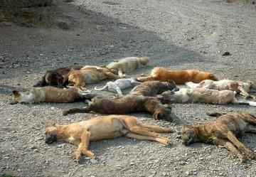 واکنش عضو شورای شهر به دستگیری معترضان به سگکشی