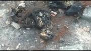 فیلم | ماجرای سگهای سوخته اهواز چه بود؟