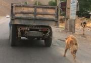 سگهای بدون صاحب شهریجمع آوری و نگهداری میشوند
