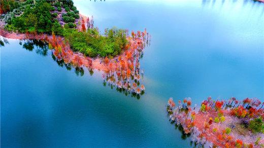 جنگل های استان ژجیانگ چین