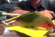 فیلم | رفتار اعجابانگیز این طوطی را حتما ببینید!
