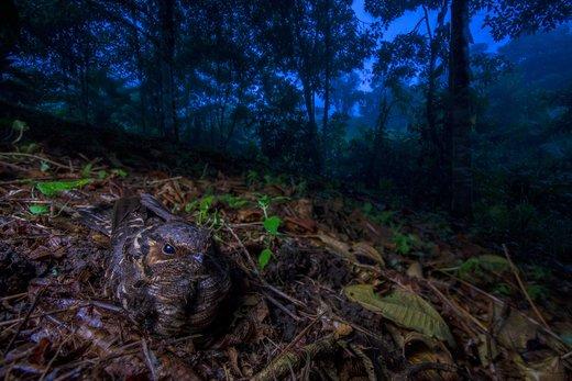برندگان مسابقه عکاسی  حیات وحش اروپا 2018