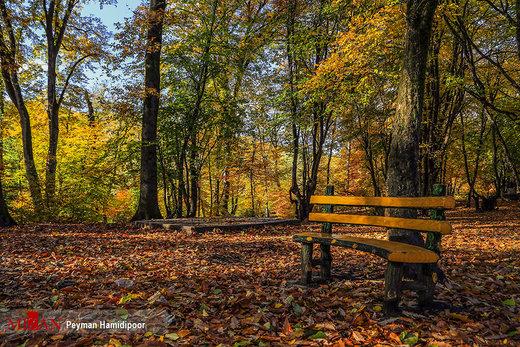 پاییز در جنگل گلستان