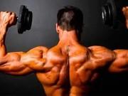 کشف دو پروتئینی که عضلات بدن را شکل میدهند