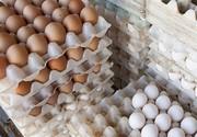 تصمیم دولت برای توزیع تخممرغ ۱۶ هزارتومانی در میادین/ تخم مرغ داخلی ۱۶ هزار تومان و تخم خارجی ۱۳۸۰۰ تومان!