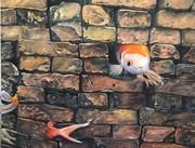 روایت تصویری عدنان مصلایی از «پیغام ماهیها»