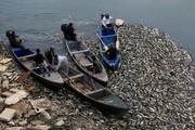 تصاویر | فاجعه زیست محیطی در رود فرات