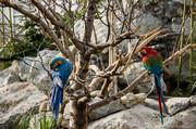 میلانی: جای قالیباف بودم فاز۲ باغ پرندگان را نمیساختم