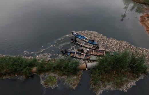 مرگ ماهیها در سواحل عراق