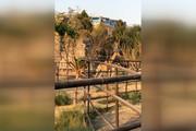 مونوپاد | اولین زرافههایی که به ایران آمدند