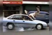 فیلم | نکتهای باورنکردنی در تصادف با عابر پیاده!