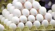 قرار نیست تخم مرغ گران شود