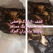 عکس | قاچاق اردک در گمرک شلمچه!