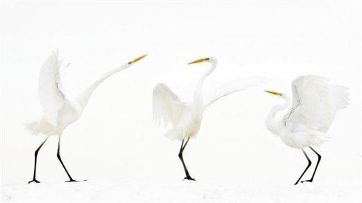 Mate برنده مسابقه عکاسی طبیعت 2018 در بخش عکاسی از پرندگان شد