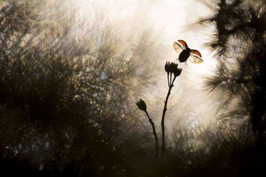 عکس «پرواز» باستین ریو  از فرانسه برنده مسابقه عکاسی طبیعت 2018 شد