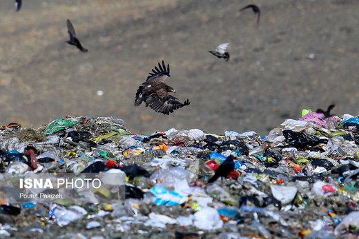 عقابهای اشغالی در ملایر