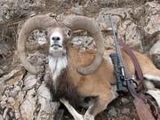 سرنوشت عبرتآموز شکارچی اردبیلی