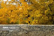 ایجاد باغ بانوان در شهر درهای سنگی در دستور کار است