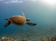 تصاویر   دنیای اسرارآمیز زیر آب