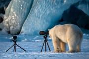 برنده جایزه بهترین عکس طنز حیاتوحش سال