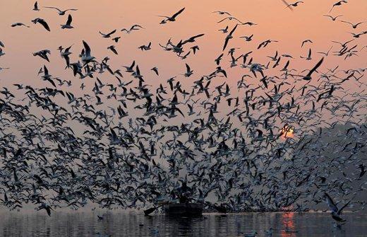 پرواز پرندگان بر فراز قایقی که در رود جمنا در هندوستان به حرکت درآمده است