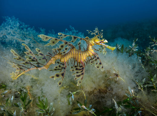 عکاسی از جانداران زیر آب