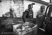 تصاویر | صید ماهی با تور و تراکتور!