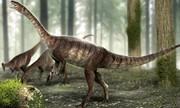 گردن درازترین دایناسوری که ۲۲۵ میلیون سال پیش میزیست / عکس