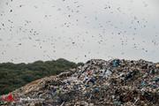تصاویر | کوه زبالهها، فاجعهای دیگر در جنگلهای شمال!