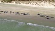 فیلم | خودکشی دسته جمعی ۱۴۵ نهنگ در نیوزیلند