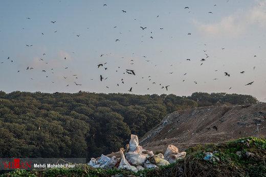 رها کردن زبالهها در جنگل نکا