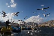 تصاویر | پرندگان مهاجر اروپا و سیبری ساکن تهران شدند