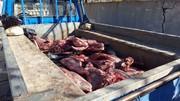شکارچیان غیرمجاز گراز در خرمآباد دستگیر شدند