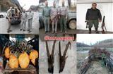 شکارچیان غیرمجاز درچالوس، کلاردشت، بابل و کیاسر دستگیر شدند