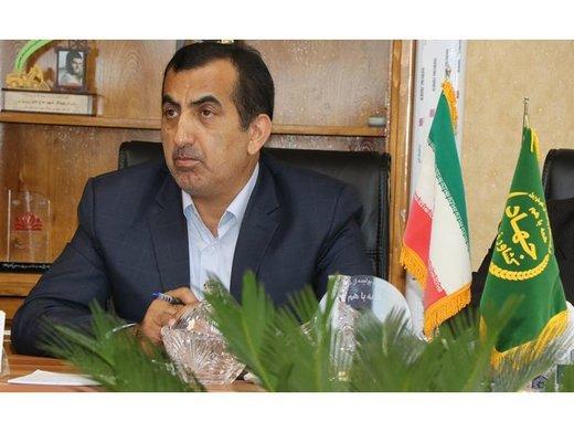 توسط سازمان جهاد کشاورزی استان ۱۵۰ هزار تنی کیوی از مازندران صادر شد