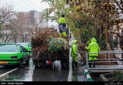 ببینید | علت هرس درختان شهری در کاشان