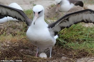 پرنده ۶۸ ساله دوباره مادر میشود/ عکس