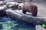 فیلم | وقتی خرس مهربان ناجی کلاغ میشود!