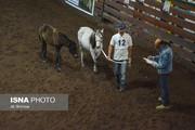 جشنواره ملی اسب کاسپین در منطقه آزاد انزلی برگزار شد