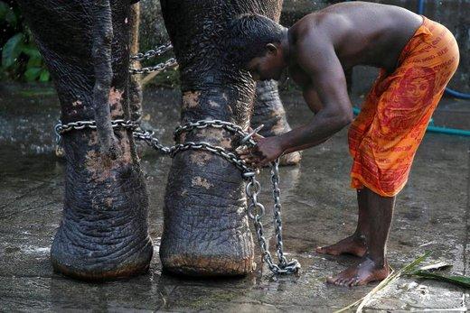 جوان هندی بعد از حمام کردن فیلش، پاهای او را با زنجیر می بندد تا او را برای نمایش در جشنواره خیابانی فیل ها آماده کند. جشنواره ای که در آن فیل ها با رنگ و لعابی که به رویشان مالیده شده و در میان موسیقی و نمایش های خیابانی رژه می روند