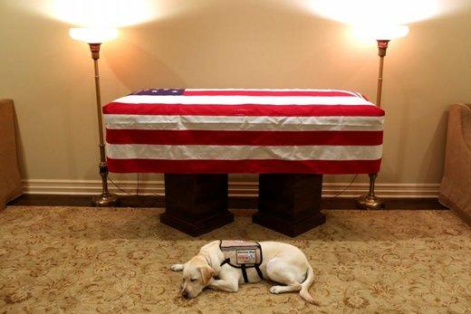 سگ جرج اچ. دابلیو بوش در مقابل تابوتش در شهر هیوستون ایالت تگزاس آمریکا چمباتمه زده است