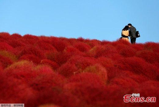 گردشگران پارک کنار آب هیتاچی ژاپن