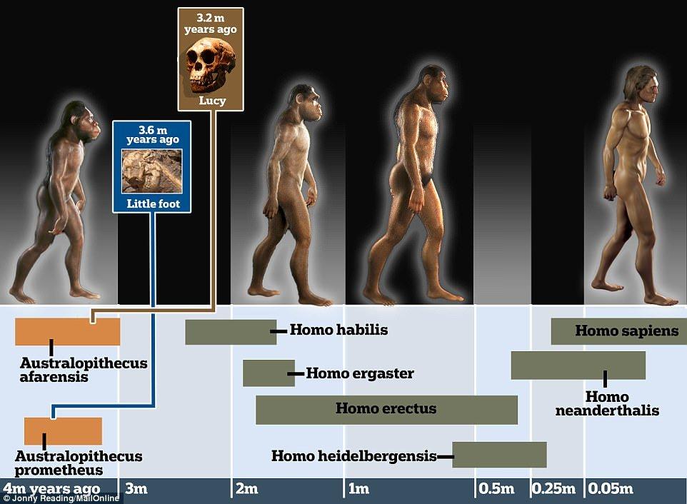 اسکلت ۳.۶۷ میلیون ساله متعلق به انسانی متفاوت از ماست؟/ عکس