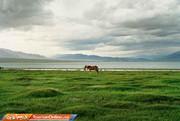 تصاویر | کشوری که جمعیت اسبهایش ۱۳ برابر انسانهاست!